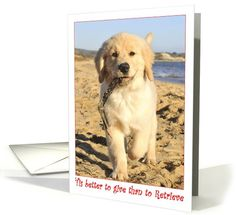 tis better to give than to retrieve golden retriever card - Humane Society Christmas Cards