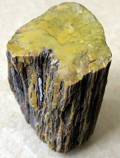 Petrified Wood from Arizona.