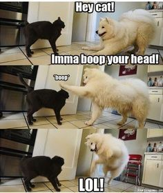 Haha I love when dogs mess with bitchy cats.  Boop!