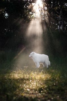 At some point, don't we all think that the sun rises and sets on those we love?  yuki the samoyed