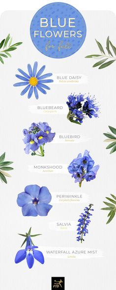 Fantastic Photos types of Blue Flowers Concepts Are you currently holding an outdoor in the backyard? A person certainly aim to restore vigorous and even mor