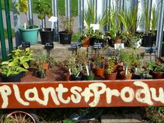 Plants for sale.