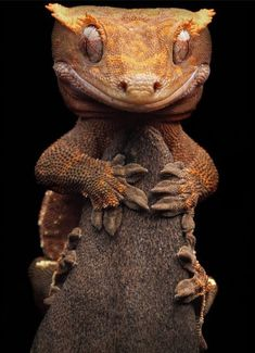 Nature Animals, Animals And Pets, Baby Animals, Funny Animals, Cute Animals, Reptiles Et Amphibiens, Mammals, Beautiful Creatures, Animals Beautiful