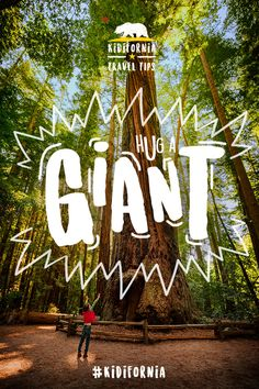 Kidifornia Travel Tip #12: Go in search of giants! Don't worry, they're gentle and love big hugs. You can find them, and even drive through one, in California's Redwood National Park. Click to discover more epic #Kidifornia adventures.