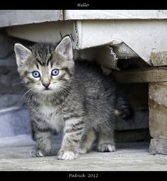 """""""I hope that people don't take a kittens on a whim, like they would a toy, and then not care for them."""" --Shirley Rousseau Murphy"""
