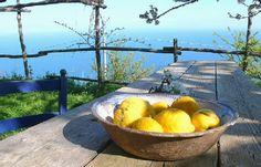Ferienhaus: Casa del Toro in Tovere di Amalfi - Die gelben Zitronen wachsen auf den terrassierten Hängen um Casa del Toro. www.amalfi-ferien.de