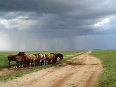 Ponies, Mongolia - Photograph by Dann Tarmy