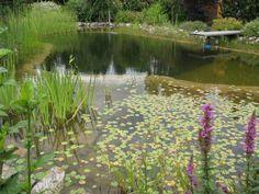 Schwimmteich Basic - Gartengestaltung Zangl