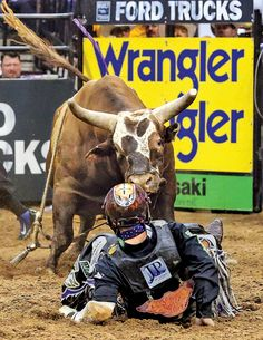 Cody Nance face-to-face with Bushwacker Saturday Aug. 16, 2014 in Tulsa, Okla. Andy Gregory/Humps N' Horns