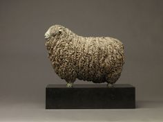 Devon & Cornwall Longwool Ram (Ed)
