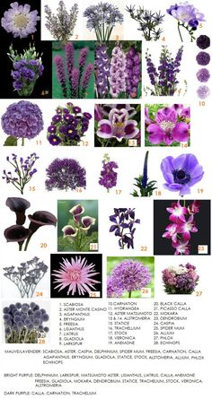 Purple flowers readily available in Western Canada. Description from dahliafloraldesign.ca. I searched for this on bing.com/images