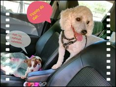 Azra, & Benji (top) enjoying a Sunday drive in Glorieta, NM