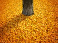 That's a lot of leaves!