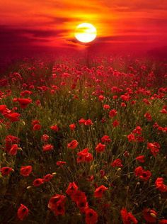 WW1 Anzacs and of the going down of the sun and in the morning,we will remember the brave soldiers who went through absolute hell in the trenches.