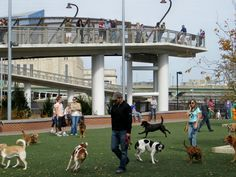 10 Non-Touristy Spots to Visit in Philly With Your Dog This Summer