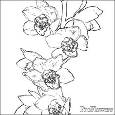 dancing orchids coloring page
