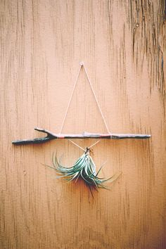 Decor Inspiration: Decorating With Air Plants | Free People Blog #freepeople