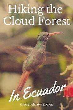 Hiking in the cloud forest in Mindo - travel in Ecuador