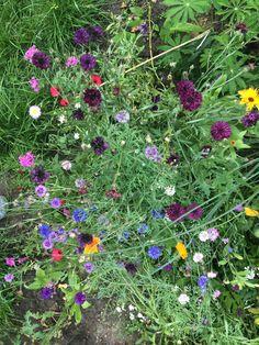 Sommer im #Märchenland in #Weissensee. Urban Gardening, Berlin, Plants, Summer, Planters, Apartment Gardening, Plant, Planting, Urban Homesteading