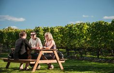 Treat yourself to a gourmet wine tour in Martinborough. A heady experience amidst acres of lush vineyards is sure to make you a 'happy' couple! Stuff To Do, Things To Do, Wine Country, Wine Tasting, Wine Recipes, New Zealand, Lush, Outdoor Furniture Sets, Tours