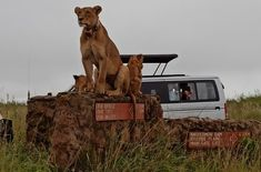 Safari v Nairobi - reportáž z Kene Nairobi, Safari, Boho, Photography, Animals, Fotografie, Animales, Photograph, Animaux