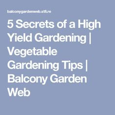 5 Secrets of a High Yield Gardening | Vegetable Gardening Tips | Balcony Garden Web