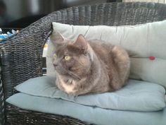 Le chat sans pattes