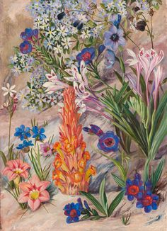 A Medley from Groot Post, South Africa. print by Marianne North from Kew - home to the world's largest collection of botanical art. Botanical Flowers, Tropical Flowers, Botanical Prints, Illustration Botanique, Plant Illustration, Beautiful Paintings Of Flowers, Marianne North, Impressions Botaniques, Afrique Art