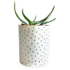 Ceramic Polka Dot Planter/Cup (655.350 IDR) ❤ liked on Polyvore featuring plants, fillers, home, decor and other
