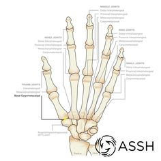 Quot Six Pack Quot Hand Exercises Hand Wrist And Finger Topics