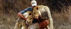 working with lions