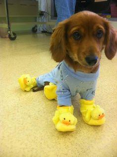 Pijama e pantufa!!!