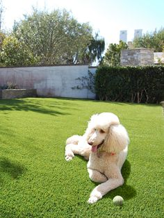 Tigerturf requires no mowing and always green; relaxing spot for you and your dog. Fake Lawn, Large Dogs, Lush, Your Dog, Pets, Green, Animals, Big Dogs, Animales