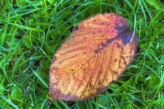 'The last leaf of autumn'