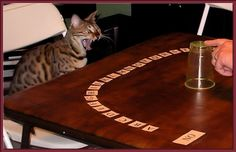 Bengal Cats are vocal and Lucy loves playing Ouija.
