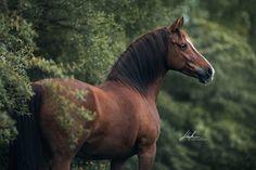 Some Beautiful Images, Beautiful Horses, Equine Photography, Photography Photos, Horse Horse, My Animal, Portrait, Pony, Illustration