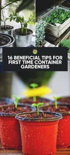 16 Beneficial Tips for First Time Container Gardeners