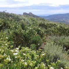 Veduta dal Monte Capannello, Rio nell'Elba