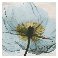 pale  #dream #pale #beautiful #blue flower