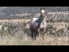 """Music for the wild horses and those who love them."" We hope you enjoy this little music video we put together to one of our songs from our OPUS MOON/WILD HO..."