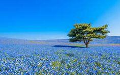 Japán, tavasz