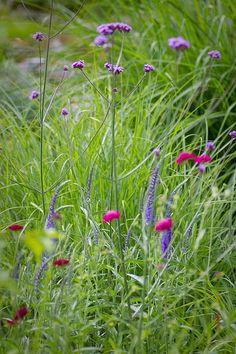 verbena bonariensis, veronica, knautia macedonica Cut Flowers, Wild Flowers, Dianthus Caryophyllus, Plant Design, Flower Boxes, Amazing Flowers, Garden Inspiration, Gardening Tips, Perennials
