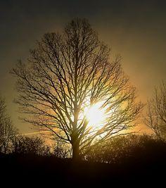 sun and tree ...