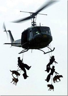 Graceful Departure honors the many brave dogs who serve. Among the bravest are the special forces k9s!
