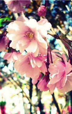 Spring Blooms  #spring #flowers