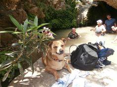 Jungle of Rhodes - Archangelos - Beoordelingen van Jungle of Rhodes - TripAdvisor Small Lake, Trip Advisor, Beauty, Rhodes, Cosmetology
