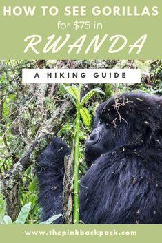 Seeing gorillas in Rwanda Rwanda Travel, Africa Travel, Safari, Dian Fossey, Gorilla Trekking, Hiking Guide, Hiking Trails, Mountain Gorilla, Travel Activities