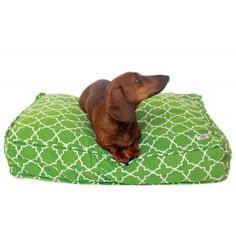 dog bed duvets