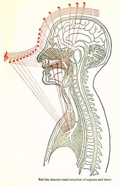 How To Sing: A 1902 Illustrated Guide from the Great German Opera Singer Lilli Lehmann – Brain Pickings