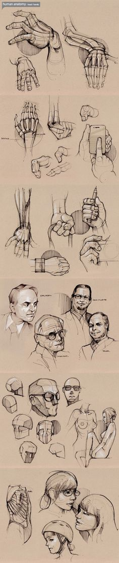 human-anatomy: